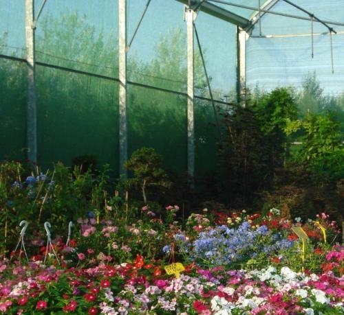 Fotos de gran centro de jardineria punt verd fonolleres for Jardineria barcelona centro