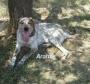 Aramis perrito abandonado busca familia