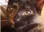 Lena preciosa mini-carey