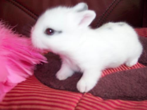 Conejos bebés blancos - Imagui