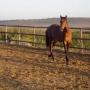 caballo de 2 años