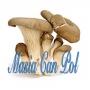 Se vende produccion de setas de ostra y alpacas germinadas