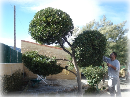 Fotos de trabajos de jardiner a en asturias gij n oviedo - Trabajo de jardineria en madrid ...