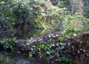 Costa Rica Al Natural  circuito de 11 días
