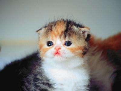 Regalamos gato hembra muy bonita