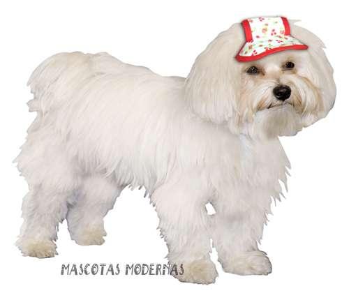 Tienda de accesorios y artculos para perros share the for Accesorios para mascotas