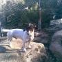 PANTXI Perro mestizo en adopcion