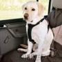 Arnes De Seguridad para tu perro Profect Plus