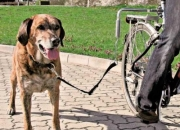 La seguridad para pasear su perro en bicicleta