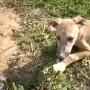 Cachorros de galgos