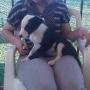 Ultimo Cachorro de border Macho