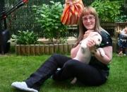 Busco Labrador macho para ADOPTAR, color perla.