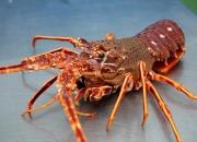 Mar Gourmet,  pescado y marisco gallego a domicilio