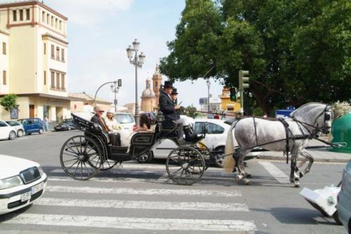 Alquiler de coches de caballos para bodas en sevilla.