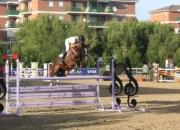 Escuela de equitación. www.hipicadeshelly.com