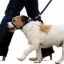Bozal educativo para perro Canny Collar en nuestroperro.es