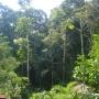 Costa Rica se venden fincas grandes desde 1000hect  a  200.000 hect.