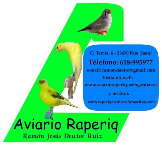 Cesión e intercambio de aves, canarios de postura, color y exóticos
