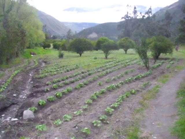 Vendo hermosa propiedad en patate san javier ambato-ecuador.