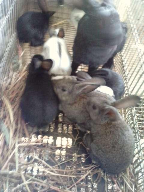 Vendo conejos baratos y buenos (málaga)