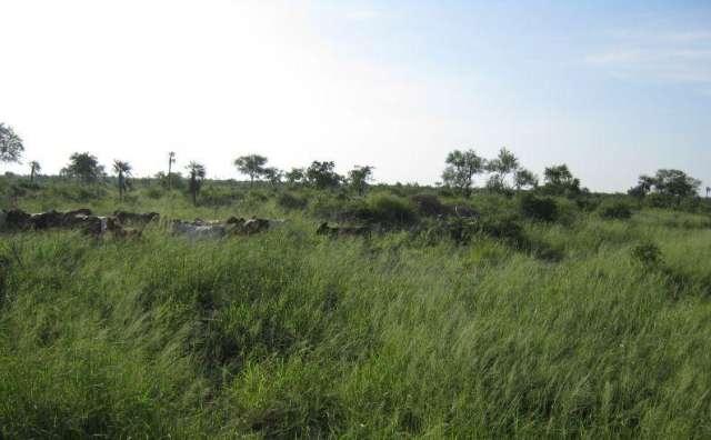 Paraguay: vendo estancia con 31.000 hectáreas para ganaderia.