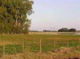 campo 530 hectareas agricolas (u$s 14.500 x ha) en argentina