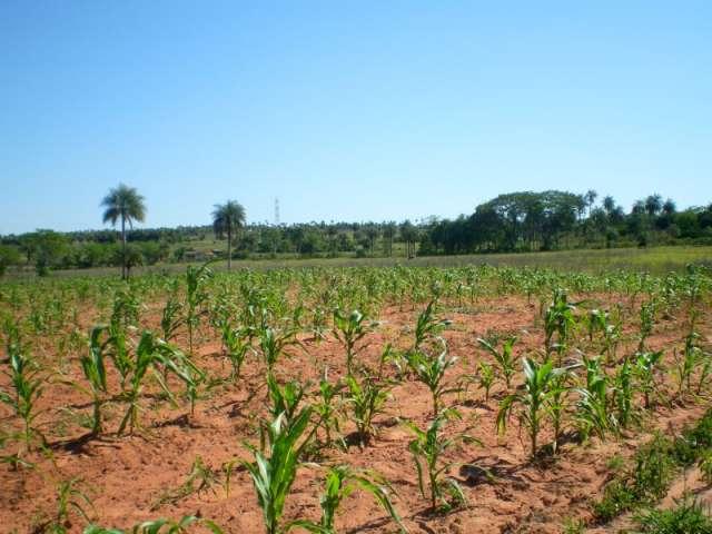 Paraguay: 17 hectáreas campo natural y campo cultivado. lago con naciente.