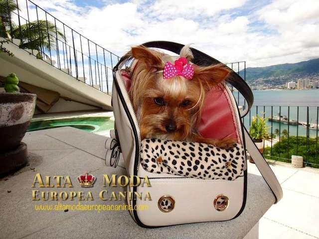 Bolsos para perros, de lujo