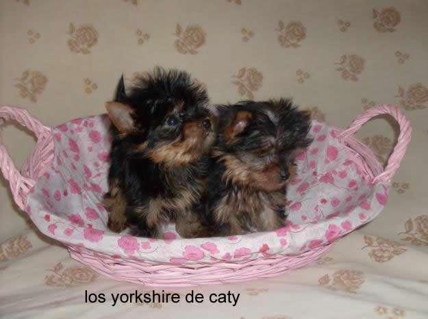 Yorkshire en tarragona