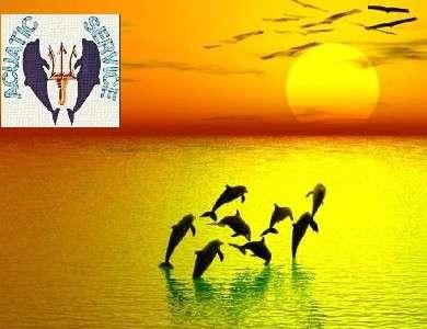 Safari de cetáceos en la gomera, acuatic service