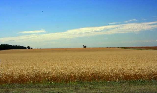 65 ha agricolas santa teresa (santa fe - argentina)