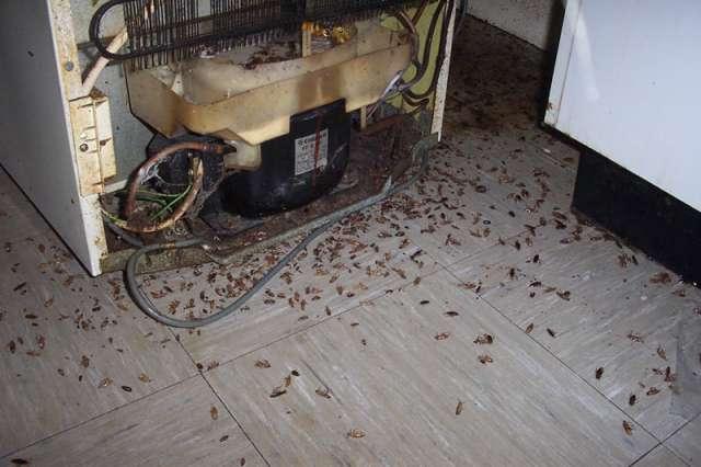 Exterminamos cucarachas con gel profesional pisos terrassa