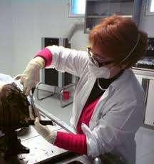Curso maquillaje de muertos o tanatoestetica con prácticas, telefono 912796901.