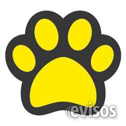 The yellow pet - piensos y accesorios para perros y gatos