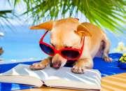 ¡cursos para aprender francés en verano!