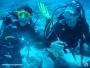 Cursos de submarinismo de PADI en Tenerife