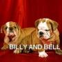 Bulldog Inglés cachorros de forma gratuita.