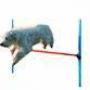 Salto De agility 100 Cm x 16 Cm  Juego de dos vallas