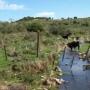vendo 5 hectareas en maldonado(uruguay)