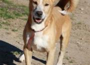 Dario es un perrito de unos 8 años unos 9 kg encantador.