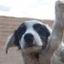 Tila es una cachorra mestiza de tamaño mediano-grande de unos 5 meses.