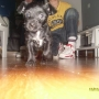 Arwen es una preciosa y simpática cachorrita negra que será de tamaño pequeño cuando sea adulta.