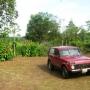 En Ecuador hacienda de 48 hectáreas en plena producción de palmito y leche