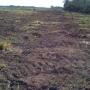 busco inversionista para campo agricola y ganadero. en argentina