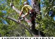 Jardineros carabaña, mantenimiento y jardineria