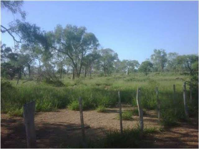 8.000 hectáreas de bosques para la venta.