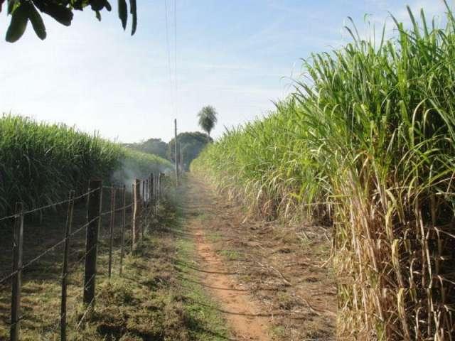 18 hectáreas de tierras de cultivo agrícola para la venta.