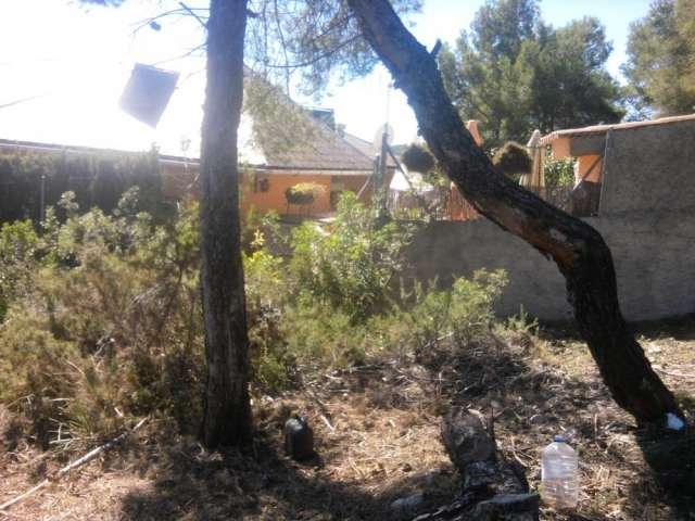 Limpieza de parcelas y poda de pinos