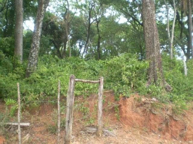 Vendo 2.8 hectáreas arbolado con bosque alto.