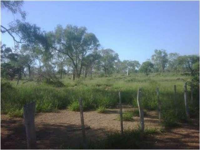 Paraguay: 8.000 hectáreas de bosques para la venta.